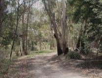 Dusty Track Australia Immagini Stock Libere da Diritti