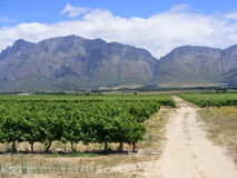 Dusty vineyard road. A dusty service road runs through a vineyard towards the Slanghoek (snake corner) mountains in the distance - Western Cape, South Africa Royalty Free Stock Photography