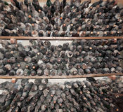 Dusty wine bottles in storage. Stock Photography