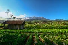 Dusun Chuntel Imagens de Stock