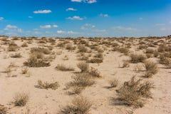 Duszna Arabska pustynia w popołudniu Obrazy Stock