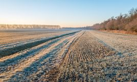 Dutch agricultural area with winter wheat sown in rows and a ditch on a cold winter morning royalty free stock photos