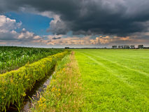 Dutch agricultural landscape. Brooding summer sky above dutch agricultural landscape Royalty Free Stock Photo