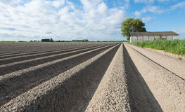 Dutch agricultural landscape in spingtime Royalty Free Stock Photos