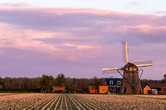 A sunset photo of Dutch agriculture field with windmill royalty free stock photos
