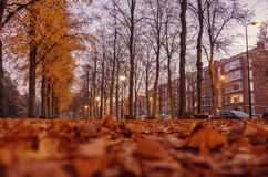 Dutch autumn in city Stock Image