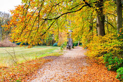 Dutch autumn landscape with footpath and beech trees Royalty Free Stock Photos