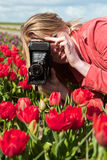 Dutch blond girl with old photo camera. Portrait of a beautiful blond Dutch girl taking pictures in tulips field Royalty Free Stock Photos