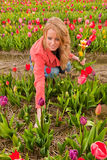 Dutch blond girl picking flowers in tulips field Stock Photo