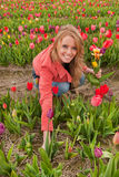 Dutch blond girl in plucking tulips Stock Photos