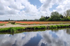 Dutch bulb field near the river in Lisse Stock Images