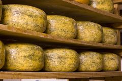 Dutch cheese III Stock Photos