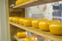 Dutch cheeses Stock Photography