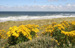 Dutch Coast in Spring Royalty Free Stock Image