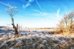 Dutch Coastal Feature. A Dutch Coastal Winter Landscape Stock Photography