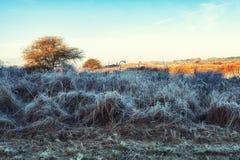 Dutch Coastal Feature. A Dutch Coastal Winter Landscape Royalty Free Stock Photography