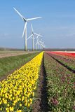 Dutch colorful tulip fields with windturbines Stock Photography