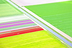 Dutch colourful flower field Royalty Free Stock Images