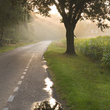 Dutch country road and farm. In early morning sun after the rain - square Royalty Free Stock Images