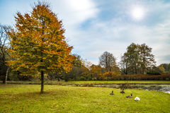 Dutch Country side landscape in Autumn Royalty Free Stock Photos