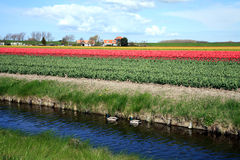 Dutch country by spring Royalty Free Stock Photo