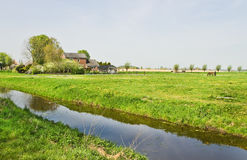 Dutch countrylandscape wirh farms. Country landscape in the Netherlands with farms, flowering meadows and grazing horses in spring Royalty Free Stock Images