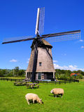 Dutch countryside. Sheep grazing in the Dutch countryside with windmill Royalty Free Stock Image
