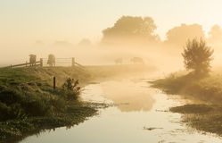 Dutch countryside. Cows on a dike of a small river in Holland during a foggy sunrise Stock Image