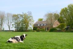 Dutch cow at the farm Stock Photo