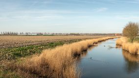 Dutch creek in the spring season. Creek on an early windless morning in the Dutch spring season. There is a plowed field next to the creek Royalty Free Stock Photo
