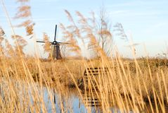 Dutch culture. Typically dutch landscape with windmill Royalty Free Stock Image