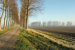 Dutch dike fields winter Royalty Free Stock Images