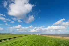 Dutch dike with sheep Stock Photography