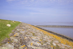 Dutch dike and waddensea Stock Images