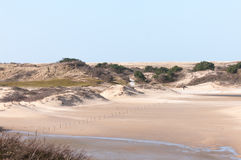 Dutch Dunes Stock Photos