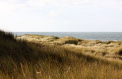 Dutch dunes with grass. A photo of the dunes in the Netherlands Stock Photography