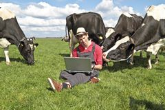Dutch farmer with his laptop. Between the cows in the countryside Stock Photography