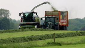 Dutch farmers are collecting grass for winterfood Stock Photo