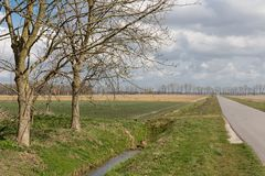 Dutch farmland with bare trees in spring Stock Image