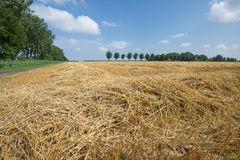 Dutch farmland with harvested wheat Stock Images