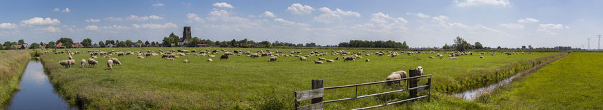 Dutch farmland panorama. A panorama of Dutch farmland filled with sheep. This area just north of Amsterdam is also knows as Waterland Royalty Free Stock Images