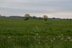 Dutch farmland at sunrise royalty free stock images