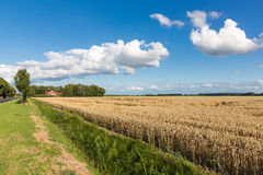 Dutch farmland with wheat field and cloudscape Stock Photos