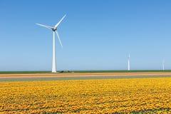 Dutch farmland with yellow tulip field and big windturbine Stock Photography
