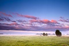 Dutch field in morning fog Stock Photos