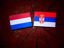Dutch flag with Serbian flag on a tree stump isolated. Dutch flag with Serbian flag on a tree stump royalty free stock images
