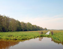 Dutch flat landscape meadow with trees and ditches Royalty Free Stock Photo