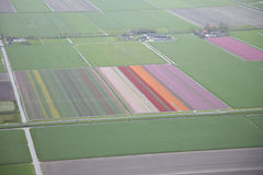 Dutch flower field from above Stock Image