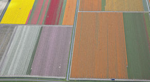 Dutch flower field from above Royalty Free Stock Images