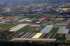 Dutch Flower and tulip fields in spring Stock Photos